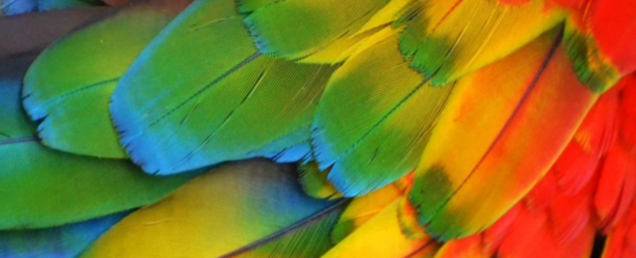 The Meaning of Different Colors of Feathers
